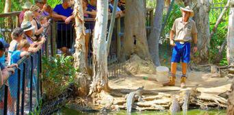 Hartleys Crocodile Adventures Breakfast with Koalas Thumbnail 4