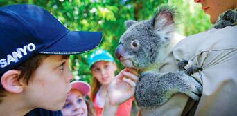 Hartleys Crocodile Adventures Breakfast with Koalas Thumbnail 1