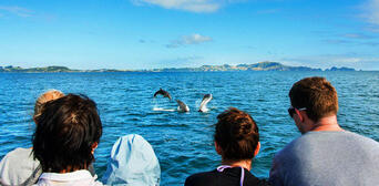 Bay of Islands Hole in the Rock Dolphin Cruise with Lunch Thumbnail 1