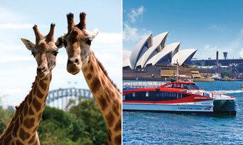 Taronga Zoo & Ferry Pass with Sky Safari Thumbnail 1