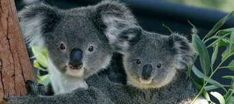 Taronga Zoo & Ferry Pass with Sky Safari Thumbnail 3