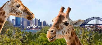 Taronga Zoo & Ferry Pass with Sky Safari Thumbnail 2