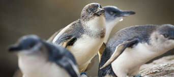 Taronga Zoo & Ferry Pass with Sky Safari Thumbnail 6