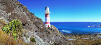 Wellington City Sights and Coastline Tour Thumbnail 1
