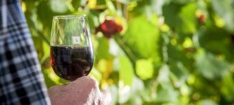 Martinborough Gourmet Wine Tour from Wellington Thumbnail 4