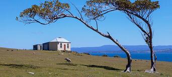 Maria Island National Park Tour from Hobart Thumbnail 1
