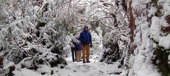 Cradle Mountain World Heritage Day Tour from Launceston Thumbnail 4