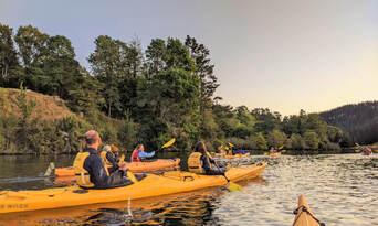 Evening Glow Worm Kayak Tour from Tauranga including Wine Tasting Thumbnail 3