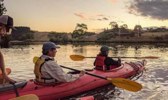 Evening Glow Worm Kayak Tour from Tauranga including Wine Tasting Thumbnail 5