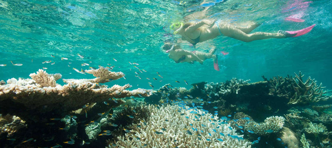 Top things to do in the great barrier reef experience oz - Best place to dive the great barrier reef ...
