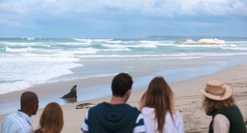 Kangaroo Island, NSW
