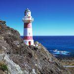 Wellington Tours